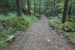 Puis un dernier petit passage en forêt pour retrouver le parking