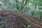 On s'enfonce dans la forêt, il faut bien surveiller la sente qui parfois est difficile à reconnaître