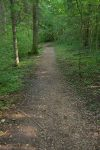 Le chemin est à plat, mais à travers la forêt