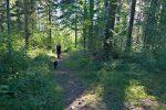 Passage en forêt, tranquille