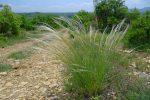 J'aime bien cette plante qui ondule dans le vent