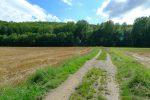 Au niveau de la route forestière, on bifurque pour rentrer dans la forêt de Chaney