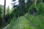 Ce sentier passe à travers la forêt pendant un long bout, ça monte mais régulièrement.