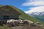 Erra d'en Haut, 2265m, qui est encore en activité avec ses moutons.
