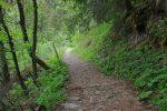 Le chemin est roulant et passe en forêt
