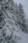 La neige s'accumulent sur les branches des sapins