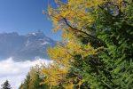Vue arrière sur la Cime de l'Est avec les belles couleurs d'automne et le stratus sur la vallée du Rhône