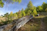 Un arbre mort laissé à l'abandon et qui doit profiter à bien des insectes et larves