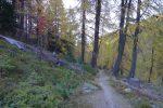 Passage en forêt, la descente est régulière et agréable
