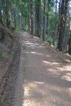 Descente sur une route forestière