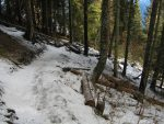 On s'enfonce dans la forêt, mais la neige se fait de plus en plus fine mais cela n'arrête pas des snowboarders dans les semelles ont dû garder quelques séquelles !