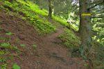 On passe à travers la forêt, brievement