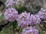 Quelques fleurs dans ce monde minéral