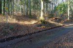 Un chemin dans la forêt, les feuilles sont par terre