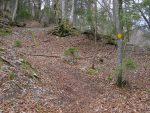 On monte dans un chemin boisé sur un tapis de feuilles
