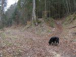 On croise à nouveau la route, et on en profite pour renifler les traces d'animaux !