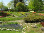 Fête de la tulipe à Morges