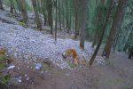 Retour dans la forêt