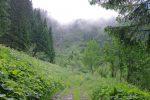 On passe dans une trouée de la forêt et dans une route forestière