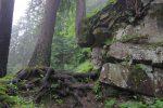 Cet arbre qui a pousse dans le rocher à droite est sympathique