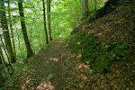Le chemin est spacieux et tranquille, tant mieux vu mon état !