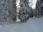 On sort de la forêt, pour arriver dans la clairière entre le Pt1214 et le Pt1199 (L'Archette)