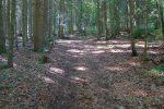 On traverse brièvement une forêt