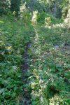 La végétation peu parfois être plus dense