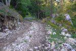 Puis on longe une route forestière bien agréable