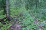 Puis une route forestière peu entretenue