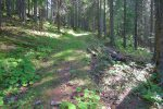 On suit la route forestière
