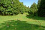 La gouille locale, on file dans la forêt sur la droite pour Le Risel