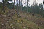 Hécatombe parmi les arbres
