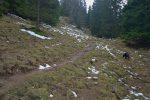 Nous suivons le sentier qui navigue dans une ouverture de la forêt. Le secteur est humide, comme souvent