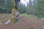 Ce tronc d'arbre m'a plu.