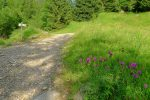 On quitte la route de 4x4 pour partir dans la forêt