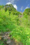 Toujours cette végétation imposante.