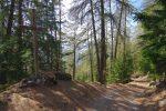 Long passage en forêt pour rejoindre Tsouma, pouah !