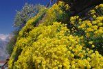 Fleurs accrochées à un mur