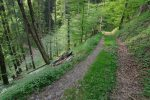 De nouveau on suit une route forestière
