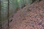 La montée s'est fait presque tout le temps sur un tapis de feuilles sèches