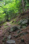 Long passage en forêt, bien mouatte
