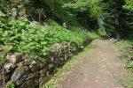 Route forestière paisible