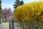 Les arbres sont bien en fleur