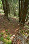 Le chemin rentre dans la forêt, il suffit de suivre les points rouges/oranges