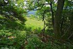 Et je sors de la forêt pour le patûrage detrempé, je mets donc les guêtres
