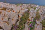 Fleurs parmi la rocaille