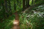 Cheminement facile sous les arbres