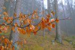 Bourgeons et feuilles mortes, le cycle de la vie