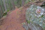 Toujours ce chemin magnifique en sous-bois